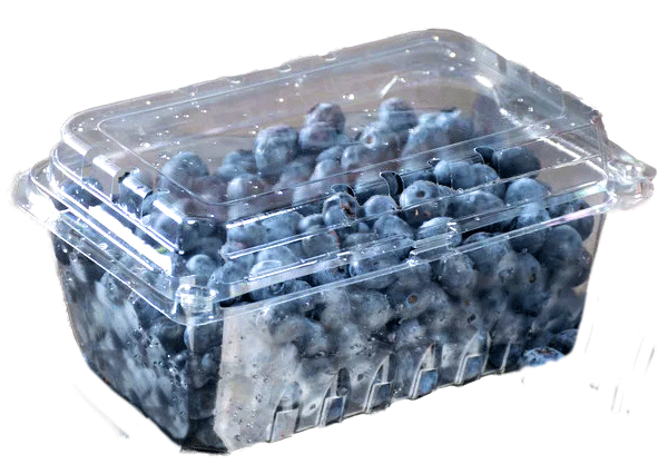 sustainable and eco-friendly packaging Clear rectangular compostable container with blueberries